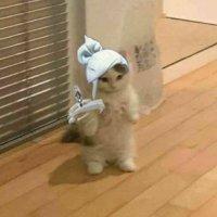 PURGΞ 🇫🇷🇨🇦 18  Hardstuck Diamond Val Player  Anime Connoisseur   #C9WIN #GoHabsGo